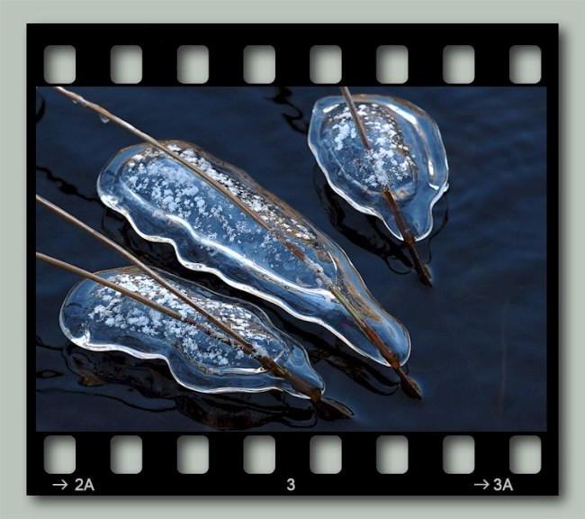 Ice Amoeba