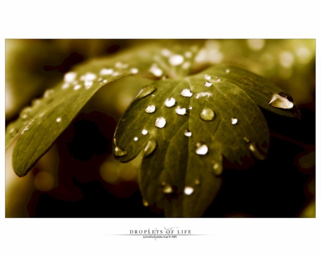 Droplets Of Life by Mr. Frenzy