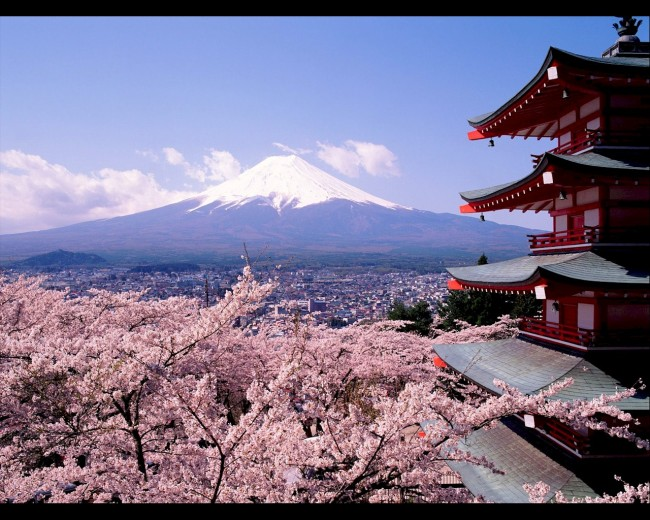 Mt. Fuji And Cherry Blossoms